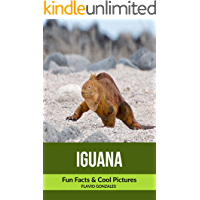 Iguana: Fun Facts & Cool Pictures