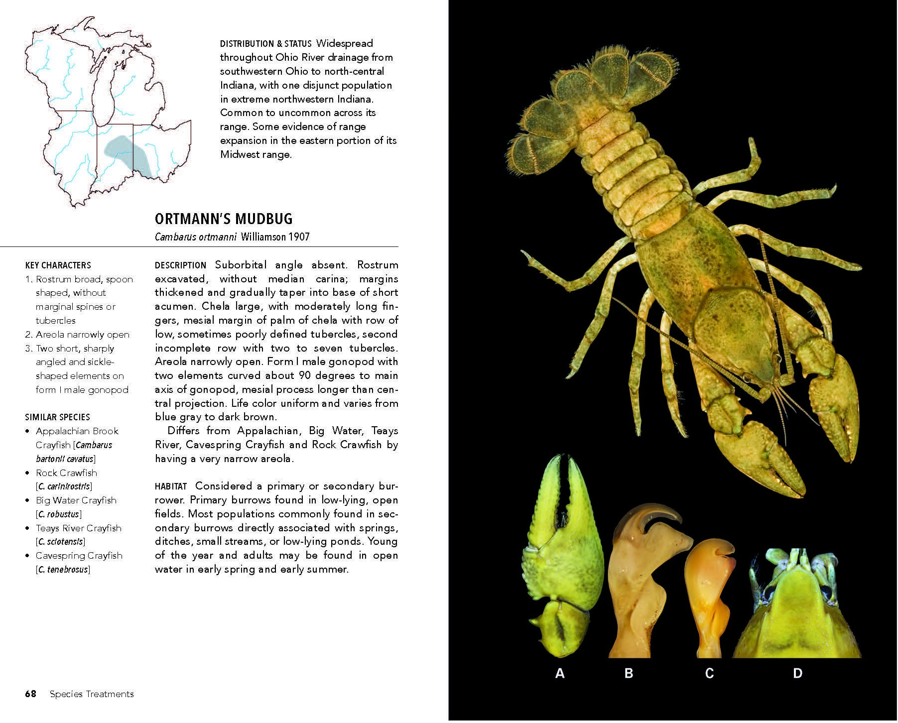 Field Guide To Crayfishes Of The Midwest Christopher A Taylor