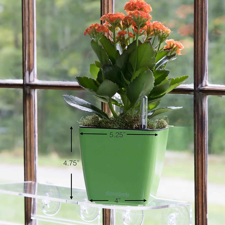 """5/"""" Decorative Planter Pot for All Plants African + Fiber Soil = Foolproof Indoor Home Garden Flowers Aquaphoric Self Watering Planter Herbs"""