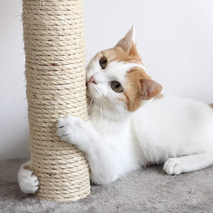Amazon.com: Cat Scratching Posts- Adult Cat and Kitten Tree ...