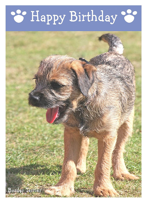 Border Terrier Named Set Of 6 Dog Photo Trade Cards