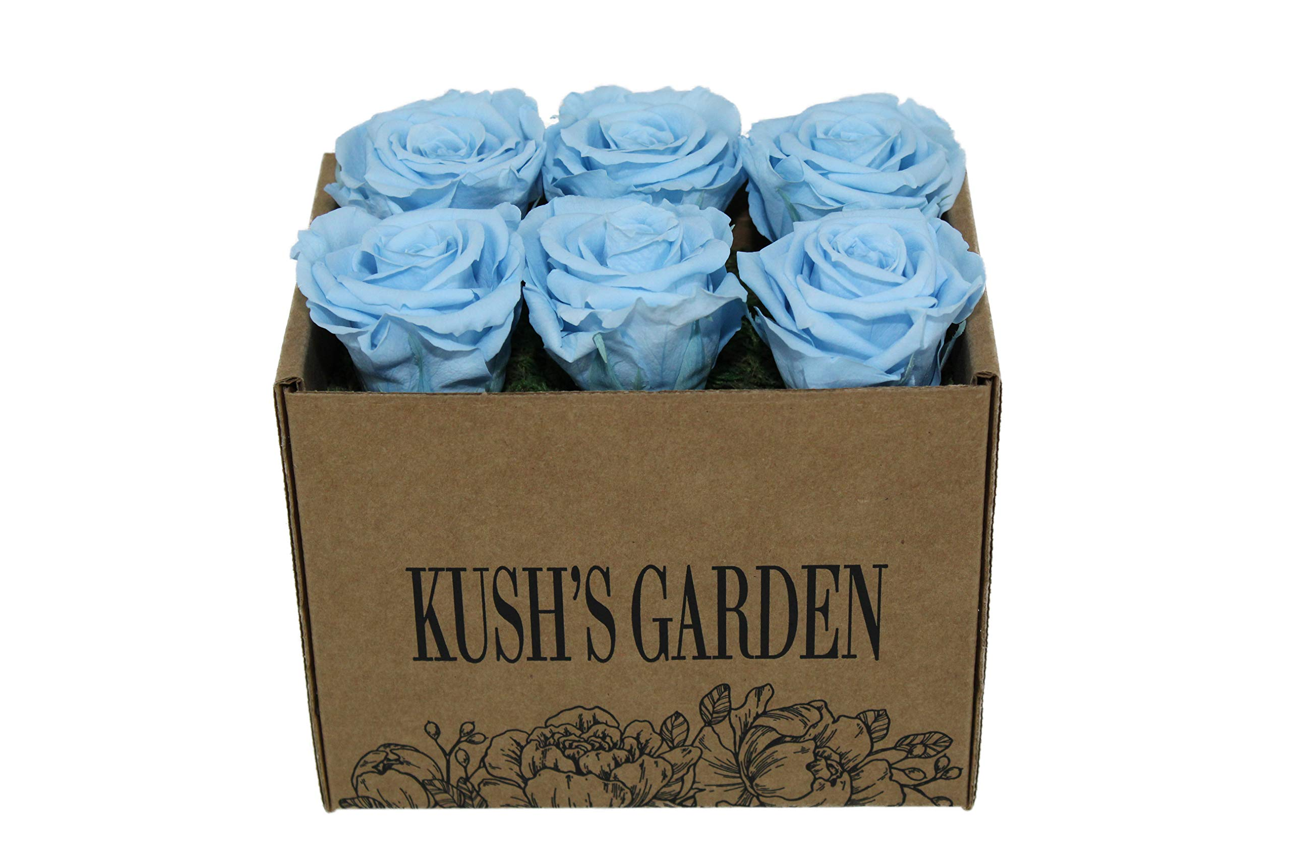 KUSHS GARDEN Real Preserved Roses in Box (Baby Blues)