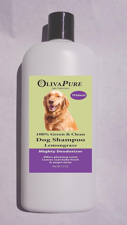 miel de manuka pour chien