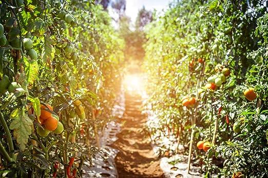 1 kg Culti Valley PK de Abono 10 - 20 Profesional Fertilizante para Frutas y Verduras con magnesio & azufre Perfecto Otoño abono Hace Que Su Jardín de ...