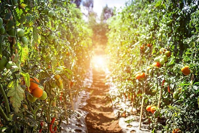 5 kg Culti Valley PK de Abono 10 - 20 Profesional Fertilizante para Frutas y Verduras con magnesio & azufre Perfecto Otoño abono Hace Que Su Jardín de ...