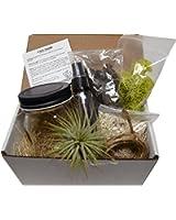 7 Piece DIY Air Pant Terrarium kit - Mason Jar / Air Plant / Coral Sand / Moss / Bark Chips / Twine / Spray Bottle (Clear)