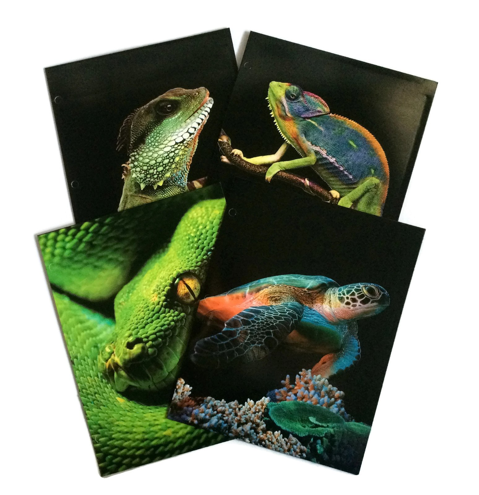 Textured Reptiles School Supply Bundle: 4 Items: Four Assorted Kittrich Subject Folders