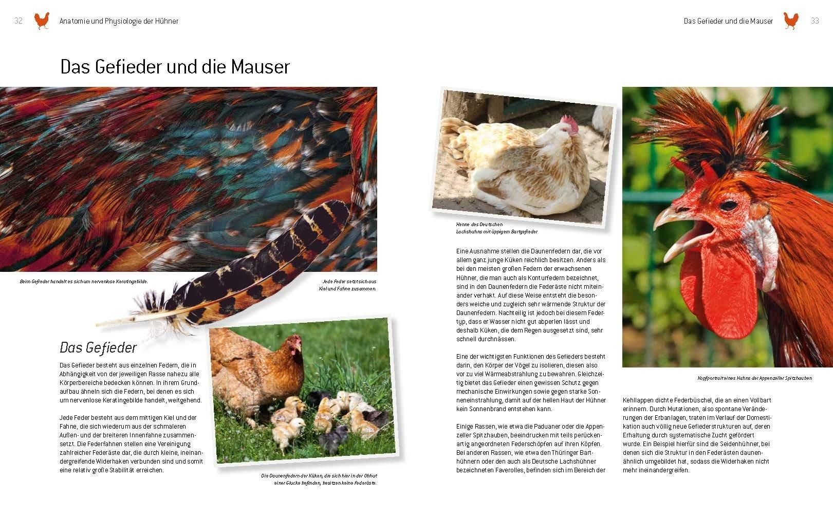 Das große Buch der Hühnerhaltung: im eigenen Garten - Pflege ...