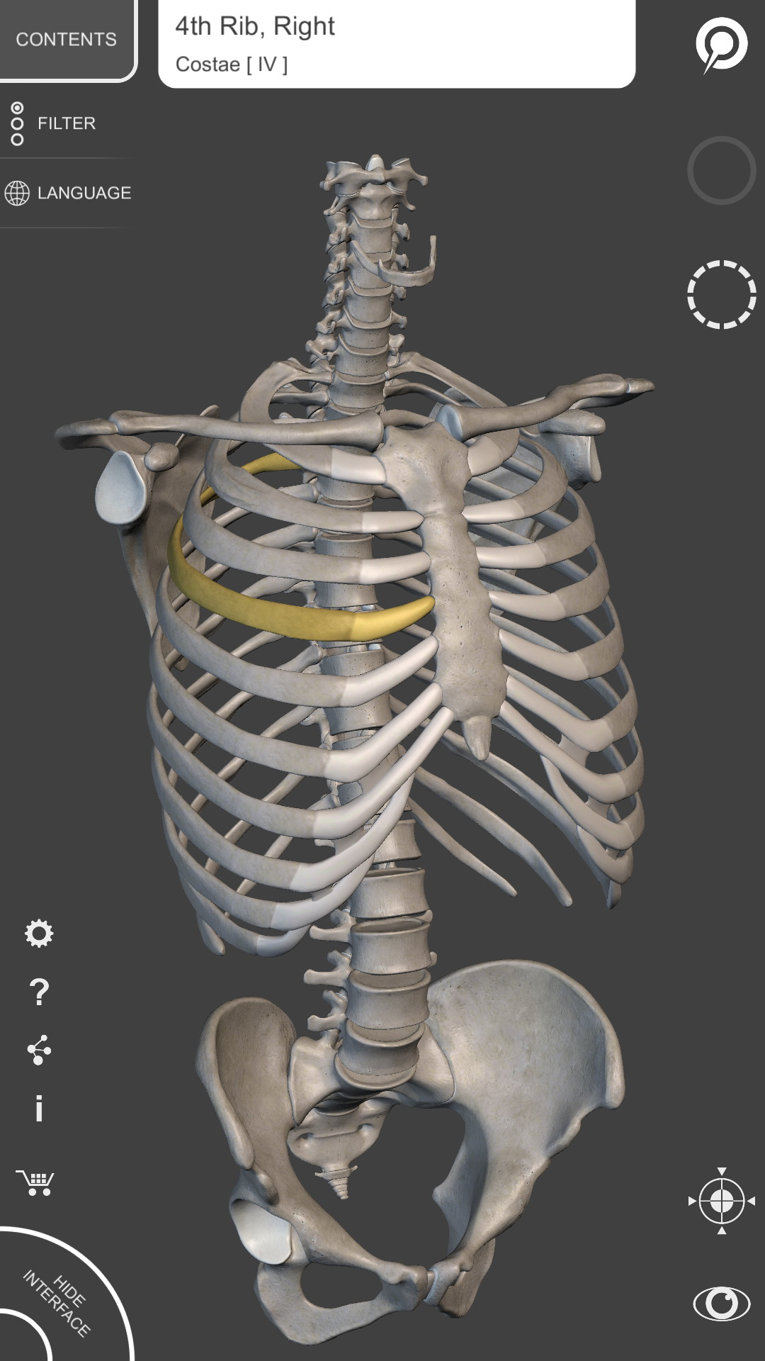 Amazon Skeletal System 3d Anatomy Appstore For Android