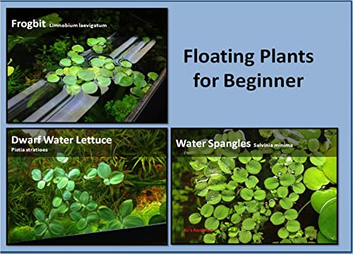 G'z Aquarium Floating Plants Package #1