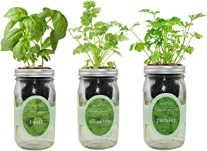 Environet Hydroponic Herb Growing Kit Set, Self-Watering Mason Jar Herb Garden Starter Kit Indoor, Grow Your Own Herbs from Seeds (Basil, Cilantro and Parsley)