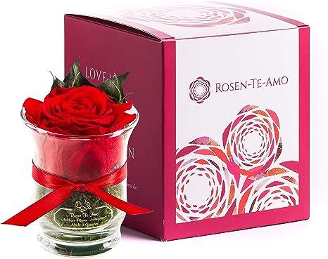 Rosen Te Amo, Ewige Rose