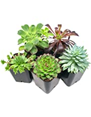 Succulent Plants (5 Pack), Fully Rooted in Planter Pots with Soil - Real Live Potted Succulents/Unique Indoor Cactus Decor by Plants for Pets
