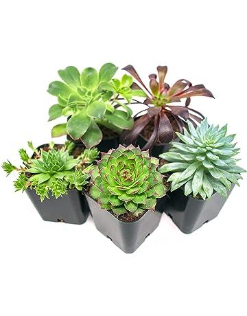 Amazon com: Fresh Flowers & Live Indoor Plants: Grocery