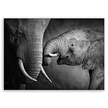 Ge Bildet Bild Auf Leinwand Mit Sommer Elefanten Schwarz Weiß Tier Bilder 70x50 Cm Einteilig Direkt Vom Hersteller Aus Deutschland