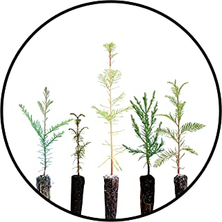 product image for Redwoods of The World   Collection of 6 Live Tree Seedlings   The Jonsteen Company