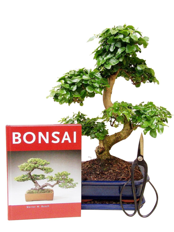 Bonsai Baum Pflege Set 2 Teilig Flussignahrung Und Schere All