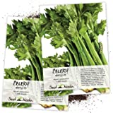 Seed Needs, Utah 52-70 Celery (Apium graveolens) Twin Pack of 1,000 Seeds Each Non-GMO