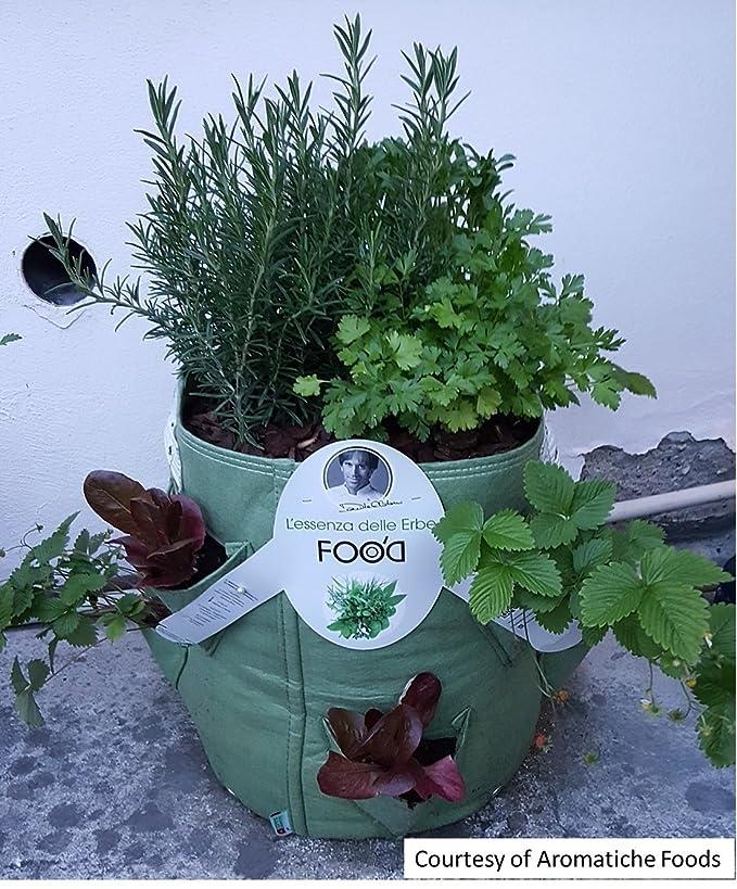 BloemBagz Mini Herb Planter: Una Maceta Textil para Sus Hierbas aromáticas con Tres Bolsillos Laterales. Color Sea Struck: Amazon.es: Jardín
