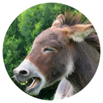 Amazon com: Donkey Sound Prank: Appstore for Android