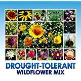 Drought Resistant Tolerant Wildflower Seeds Open-Pollinated Bulk Flower Seed Mix for Beautiful Perennial, Annual Garden…