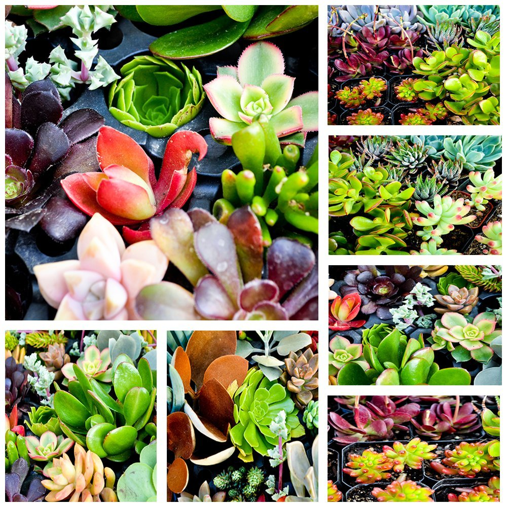 10 Assorted Succulent Cuttings ~ No 2 Cuttings Alike