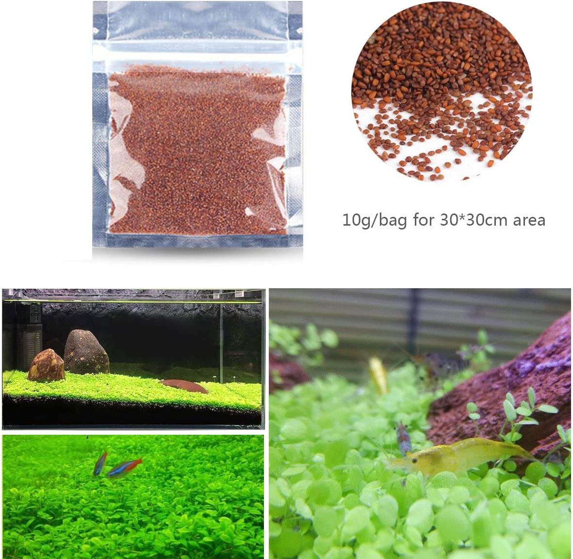 Amazon Com Fish Tank Water Plant Seeds Small Leaf For Landscaping