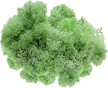 or Any Craft or Floral Project Reindeer Moss Preserved Plus Free Nautical Ebook by Joseph Rains for Fairy Gardens 8 oz Lime Green Moss Terrariums