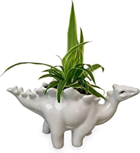 Dinosaur Planter. This Gorgeous Dinosaur Succulent Planter in White Ceramic will add a touch of fun to any Dinosaur Decor. These Cute Planters make an ideal Small Cactus Pot or Animal Planter. (White)