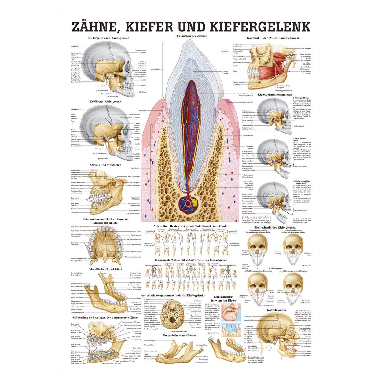Nett Untertitel Greys Anatomy Bilder - Anatomie Ideen - finotti.info