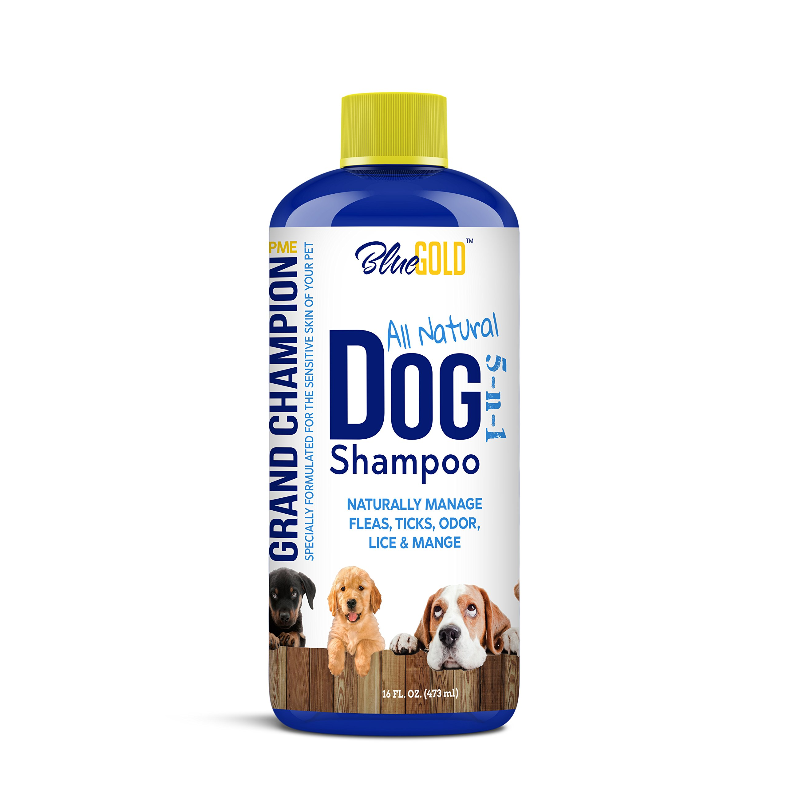 Blue Gold All Natural Dog Shampoo Puppy Shampoo. Deodorizing Antibacterial Anti-Fungal Dog Shampoo for Itchy Dog Skin, Dog Allergies, Dog Dandruff, Dog Shedding, Dog Mites Fleas Ticks Lice Mange. by Blue Gold