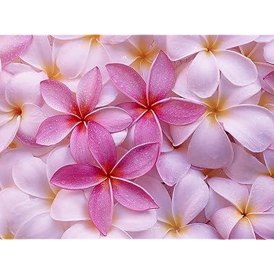 HAWAIIAN PINK PLUMERIA PLANT CUTTING ~ GROW HAWAII : Garden & Outdoor