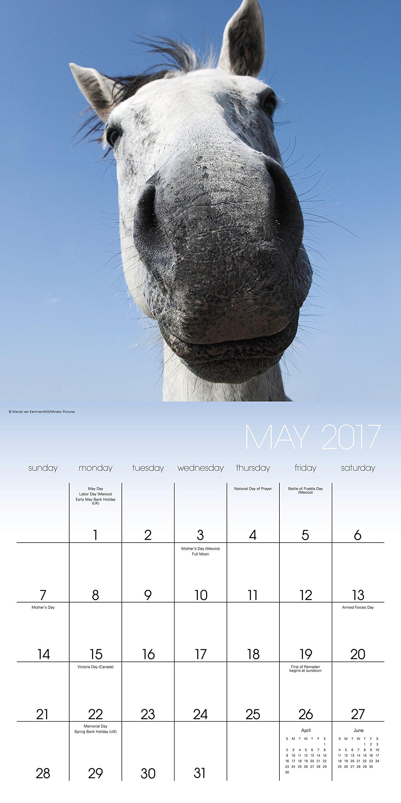 Animal Selfies Wall Calendar (2017): Landmark: 9781629059921: Amazon.com:  Books