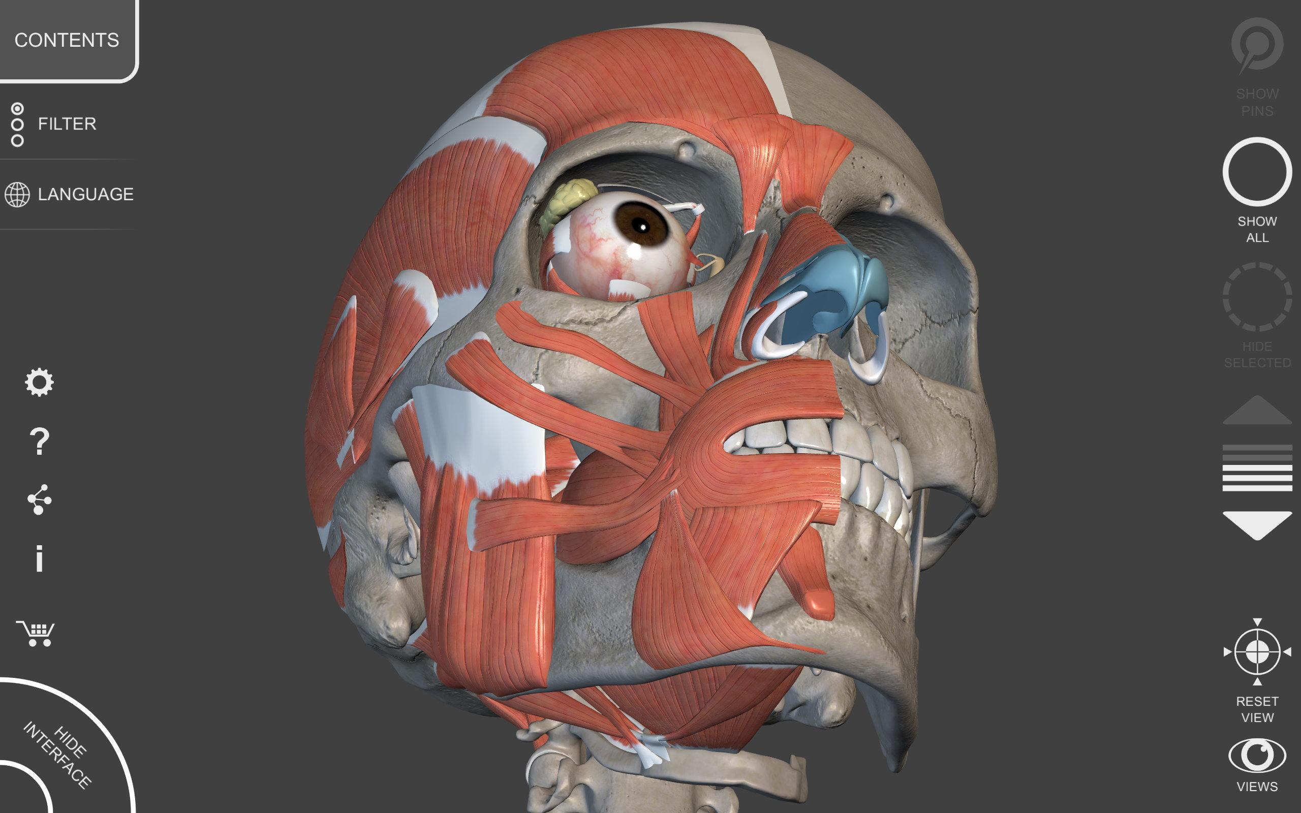 Lower Limb • 3D Anatomy Atlas • AnatomyZone