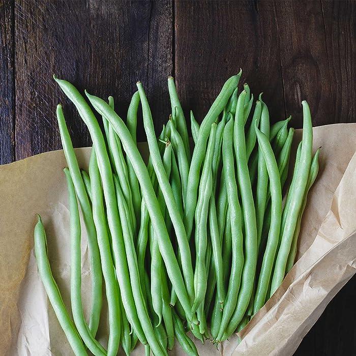 Blue Lake Bush Bean 274 Seeds - 1 Lbs - Treated, Non-GMO, Heirloom, Open Pollinated - Vegetable Garden Seeds - Green String Beans