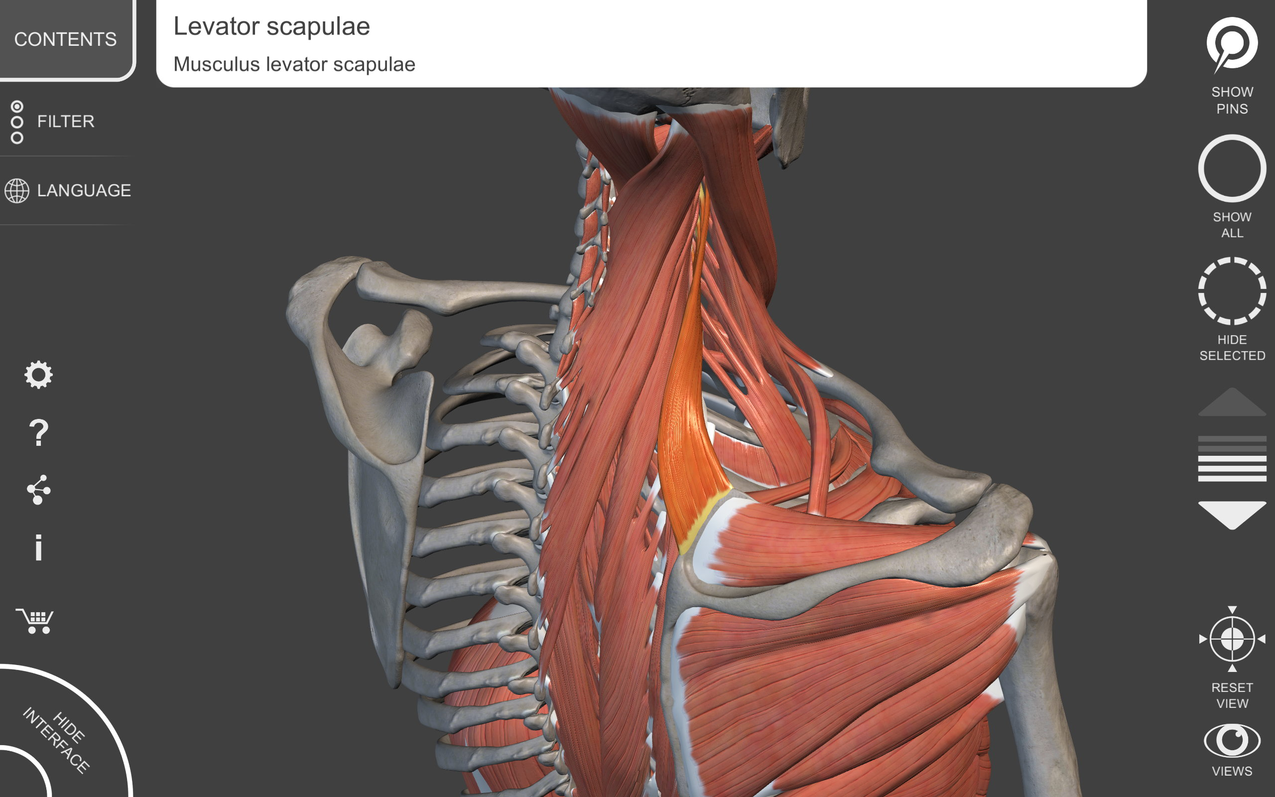 Amazon Muscular System 3d Atlas Of Anatomy Appstore For Android