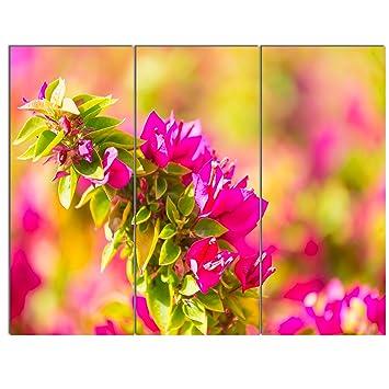 Amazon.com: Beautiful Pink Bougainvillea Flowers Floral on Canvas ...