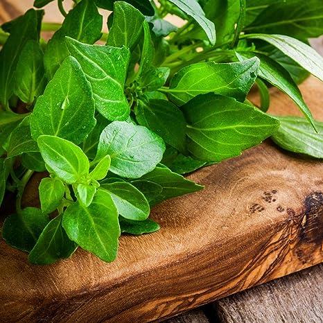 Semi piante aromatiche online dating