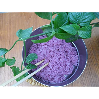 "9EzTropical - Magenta Leaf Plant - Lá C?m - 4"" Tall - Ship in 3"" Tall Pot : Garden & Outdoor"