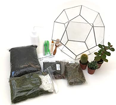 Terrarium dodécaèdre avec kit Terrarium, Plantes, Outils et ...