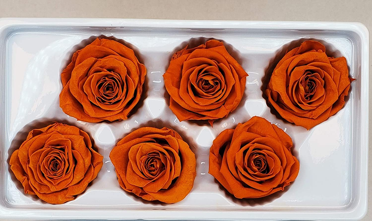 DIY Crafts Orange Perfect Alternative to Artificial /& Dried Flowers Ogis Florist 100/% Real All Natural Premium Preserved 6 Large Heads Roses Last for Months Decoration No Water Needed