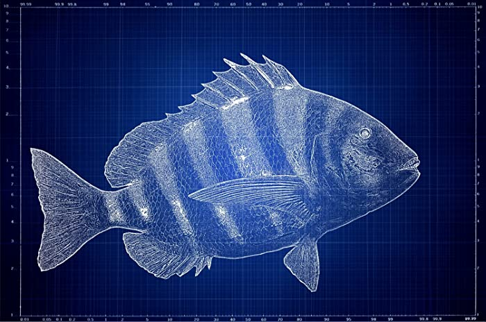 Amazon deep sea fish blueprint nautical art coastal art deep sea fish blueprint nautical art coastal art beach art blueprint malvernweather Gallery