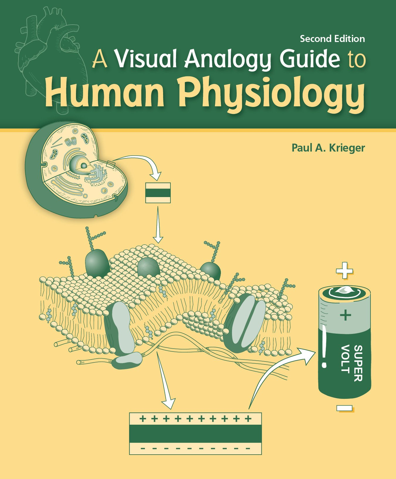 A Visual Analogy Guide To Human Physiology Amazon Paul A