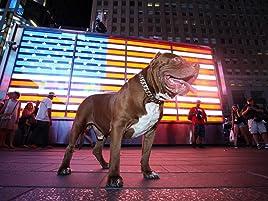 Amazon com: Watch Dog Dynasty | Prime Video