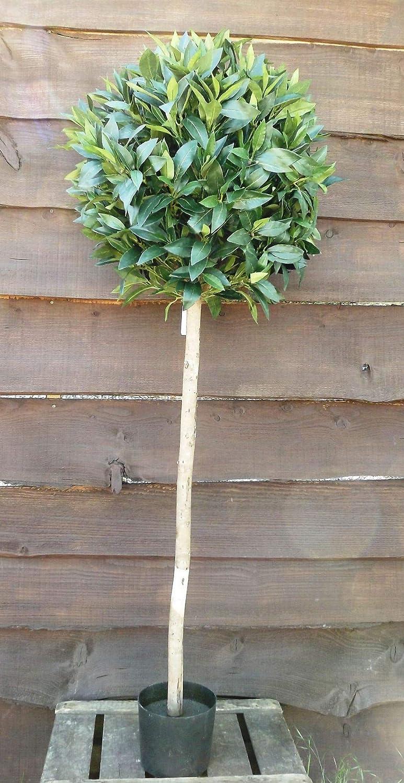 Artificial Silk Bay Topiary Tree In Pot Green 160cm