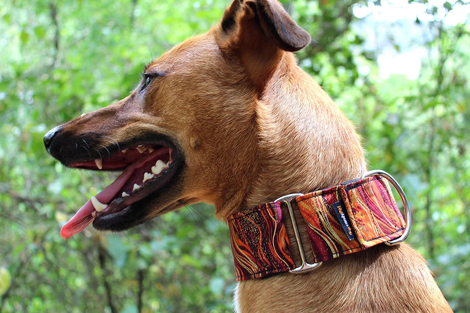 candyPet Collar Martingale Para Perros - Modelo New Waves, M ...