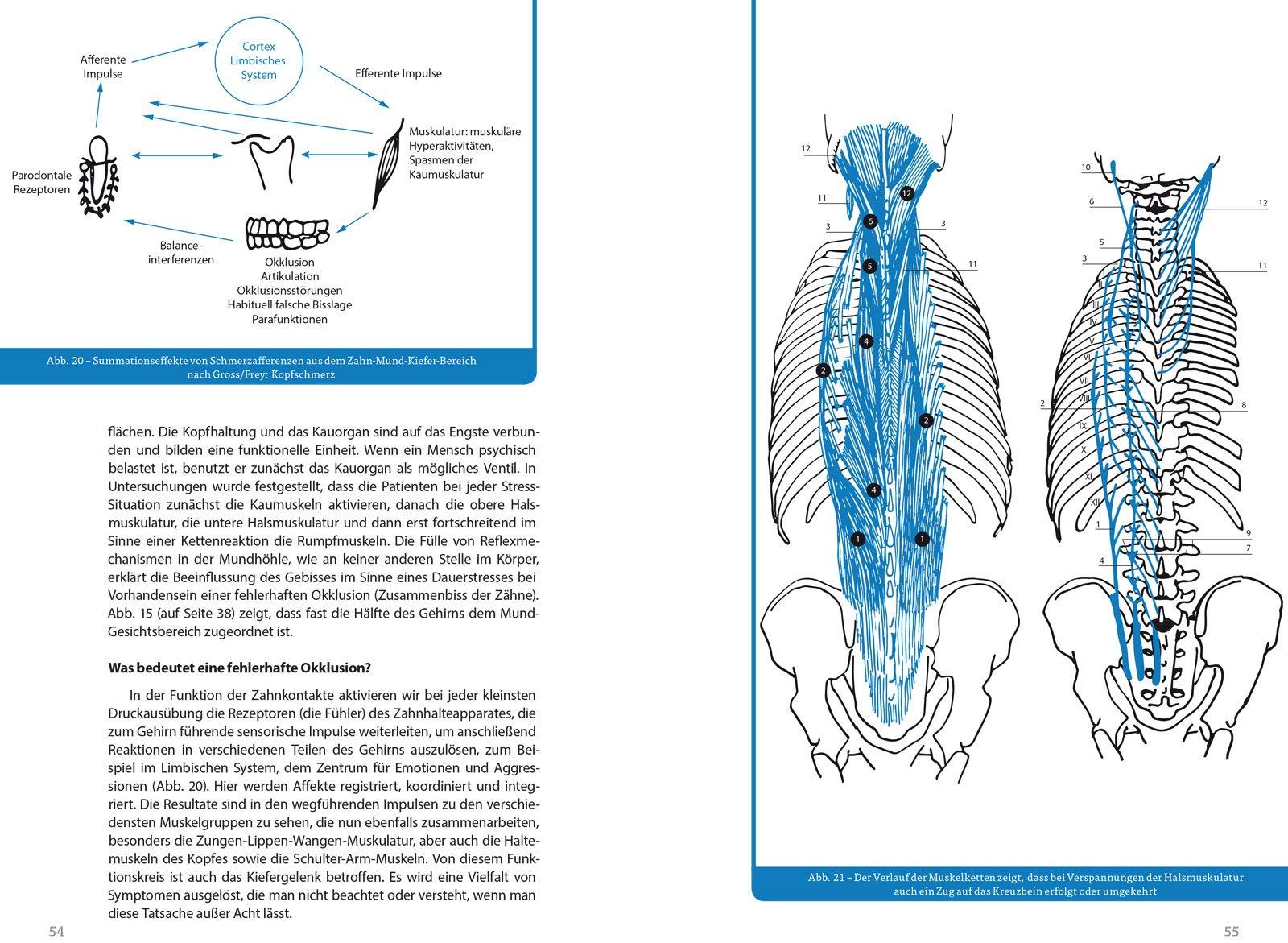 Wunderbar Muskulärer Sytem Zeitgenössisch - Menschliche Anatomie ...