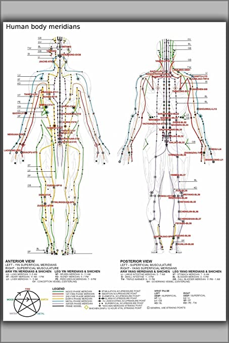 Amazon com 24 x36 poster chinese or human body meridians for