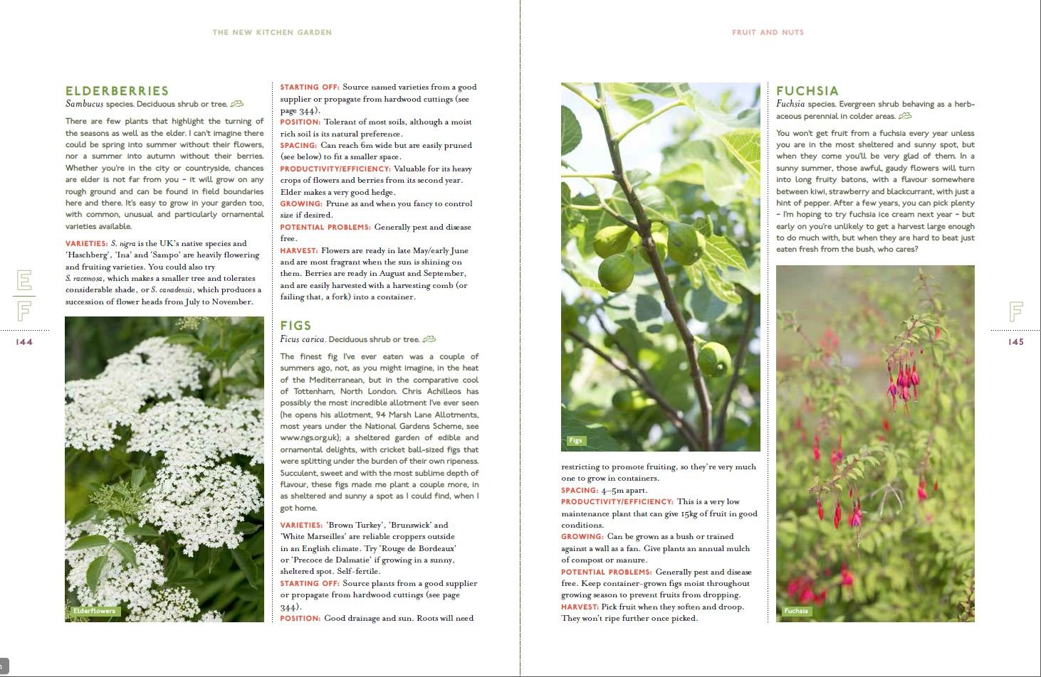 The New Kitchen Garden: How to Grow Some of What You Eat No Matter ...