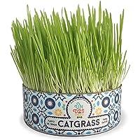 Un Dos Treats Catgrass pasto de trigo para gatos, 1 Lata